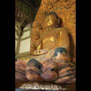 Amida: a Golden Buddha