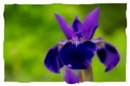 thumb_14_purplebloom