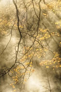 02_Golden_Light-copy