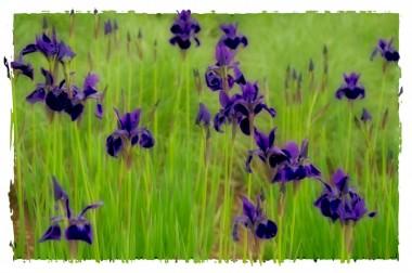 15_purplebudsandblooms