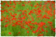 Flower Impressions gallery link