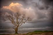 thumb_13_Tree-and-Sky-on-Northshore