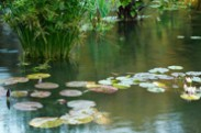 Jerry Kaufman, Pool of Bethesda, Photography, New York City, Central Park, terrace pool with water lilies